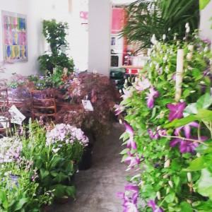 Livraison-plantes