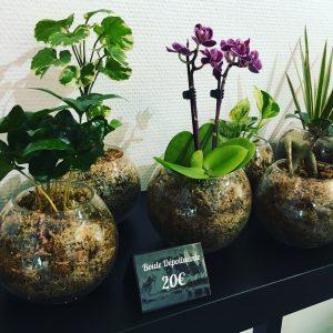 envie d offrir ou de s offrir une plante qui dure direction boby la plante le zoo la. Black Bedroom Furniture Sets. Home Design Ideas